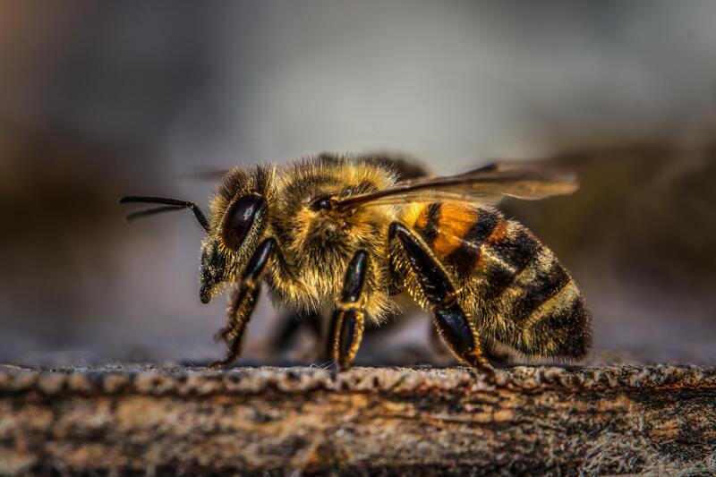 honey bees County Pest Control Birmingham